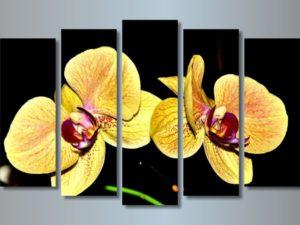 Модульная картина Желтая орхидея