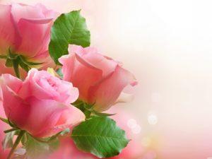 Фотообои Розовые бутоны