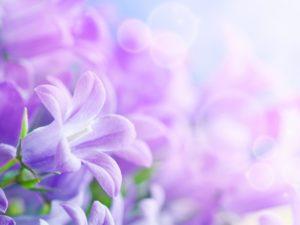 Фотообои Весенние цветы