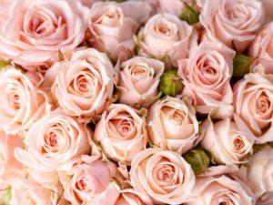 Фотообои Розовые розы