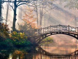 Фотообои Мост в лесу