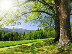 Фотообои Вековые деревья