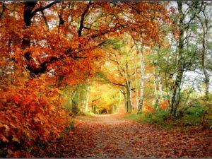 Фотообои В осеннем лесу