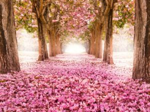Фотообои Сад в цветах