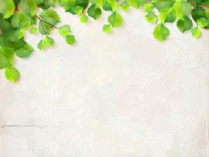 3D Фотообои Зеленые ветви