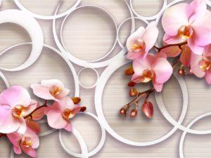 3D Фотообои Ветки орхидей